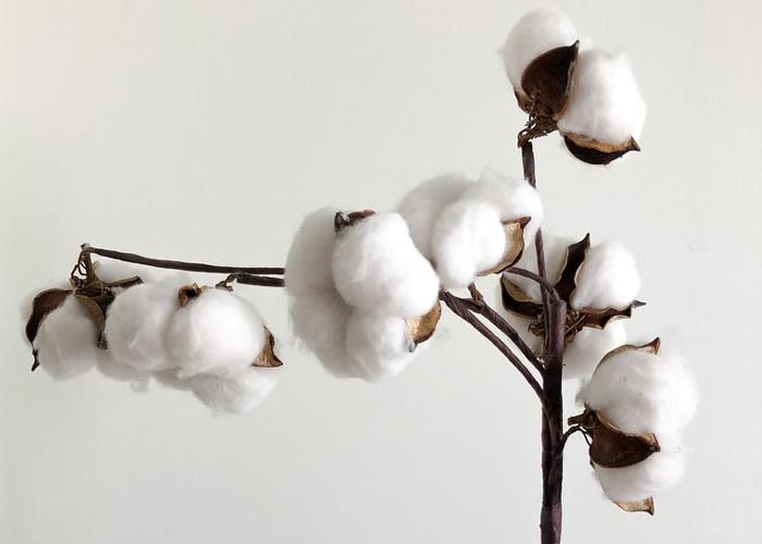 organic khadi cotton making